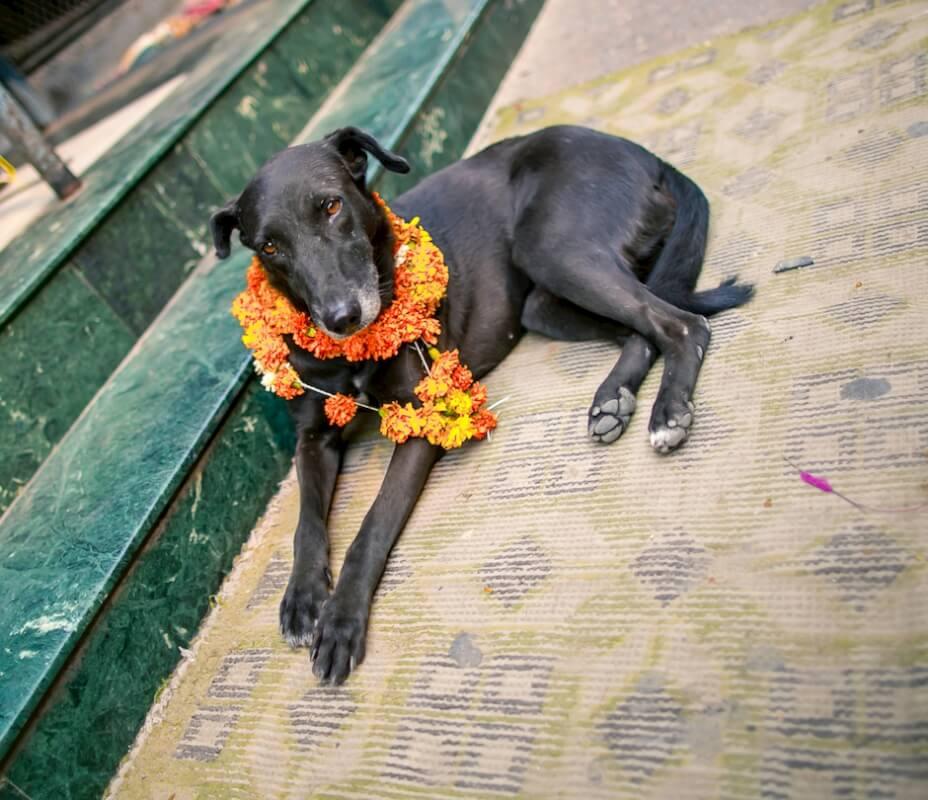 9 candid wedding photographers india